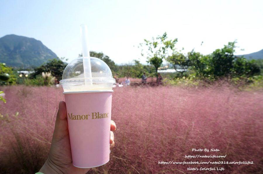 濟州島自由行│西歸浦景點│마노르블랑(manorblanc) Cafe。IG熱門打卡❤粉紅色花海!粉紅芒草(粉紅亂子草핑크뮬리)