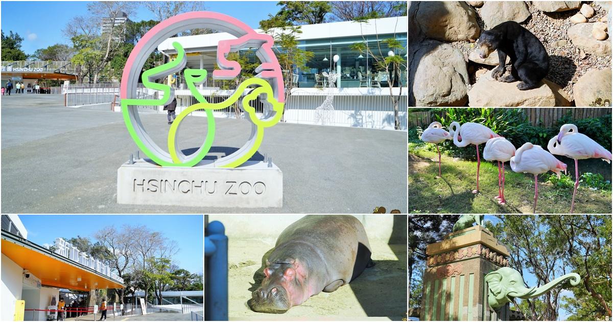 清新舒適日式風的新竹市立動物園,友善環境飼養的動物環境