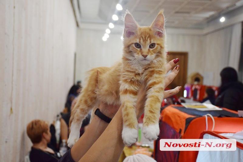 В Николаеве прошла выставка кошек. ФОТО