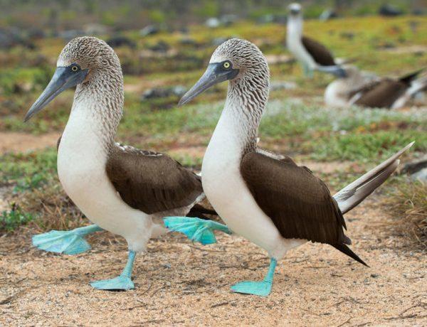Необычные и удивительные птицы мира. ФОТО