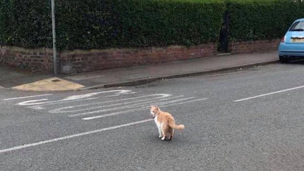 Обидевшийся кот сбежал из дома и стал настоящей звездой в английской деревне. ФОТО