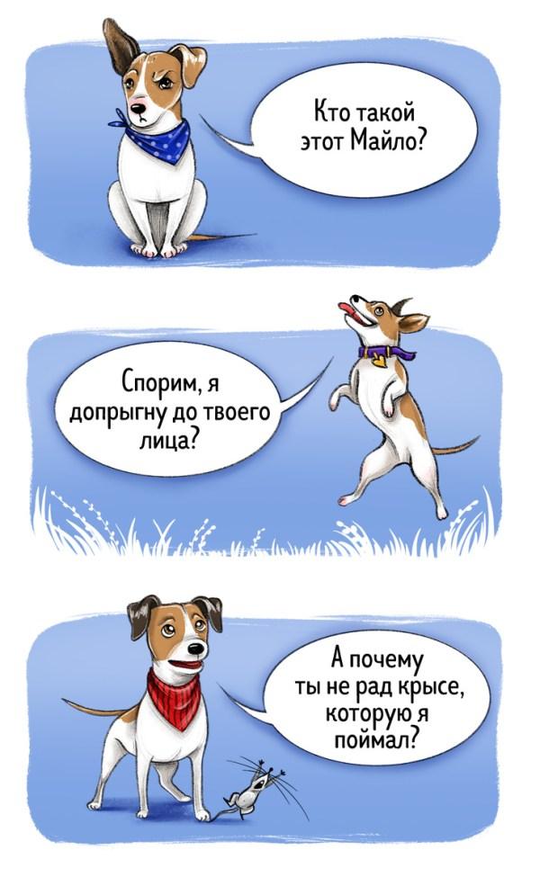 Забавные картинки про характер разных пород собак. ФОТО