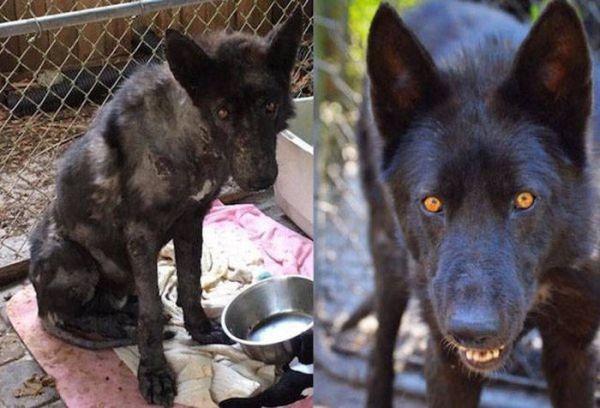 Животные взятые из приюта: до и после. ФОТО