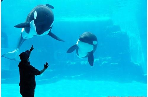 【名古屋景點】名古屋港水族館 適合親子同遊的好地點