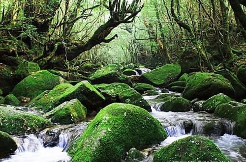 【遠見專欄】日本小島旅行–世界遺產海上阿爾卑斯屋久島