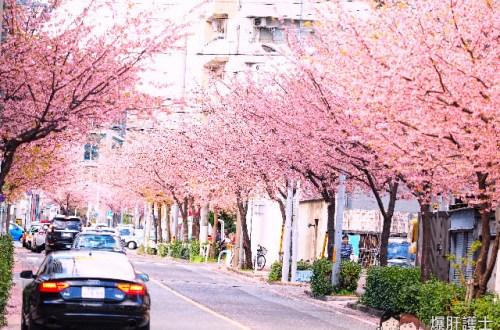 名古屋賞櫻地點 櫻通線高岳站2號出口處