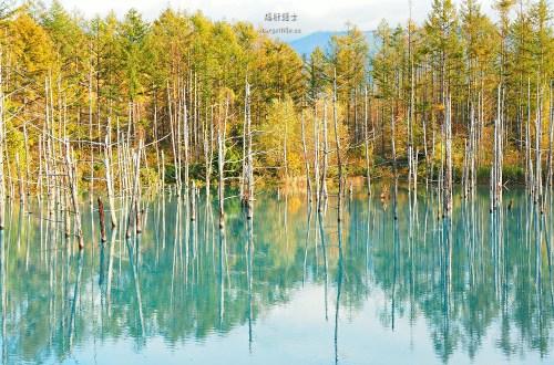 北海道、美瑛 青池.秋色打翻一池tiffany藍