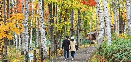 北海道、富良野 風之花園.森林裡的英式花園