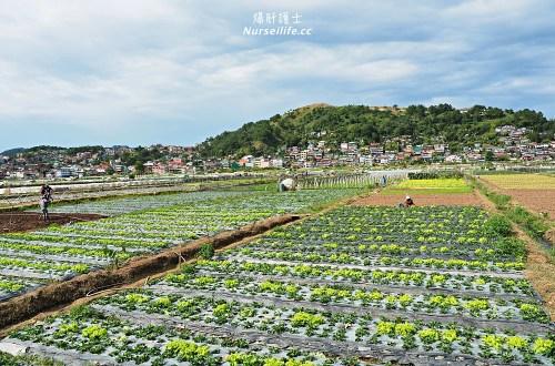 菲律賓、碧瑤BECI遊學日誌|Strawberry picking.來採草莓吧!