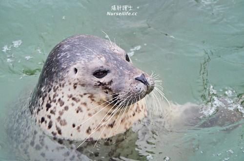 北海道|野寒布寒流水族館、青少年科學館.最靠北的餵海豹之旅