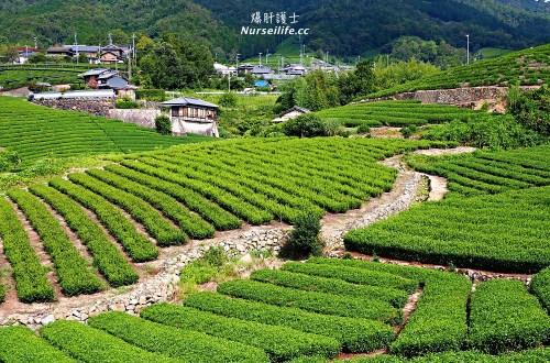 京都深度之旅–茶之京都:到日本茶的故鄉來段身心療癒之旅