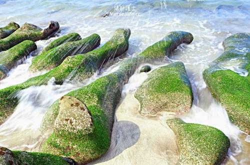 北海岸石門一日遊:嵩山百年水梯田、老梅綠石槽、富貴角燈塔、富基漁港
