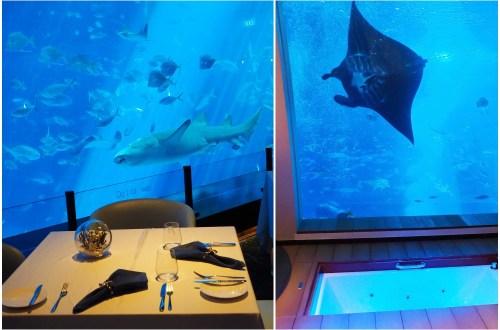 海洋控不能錯過!新加坡聖淘沙名勝世界海之味水族館餐廳及海景套房