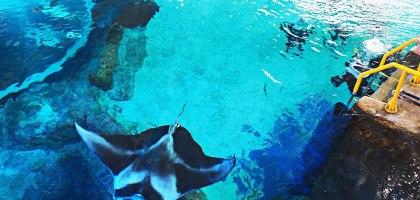新加坡聖淘沙名勝世界水上探險樂園.與魚群共遊體驗海王子的世界
