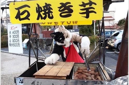 【鳥取/倉吉】白壁土藏群・赤瓦 觀光散策 X 隱藏版貓咪烤番薯