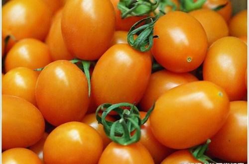 忘憂園 橙蜜香小蕃茄