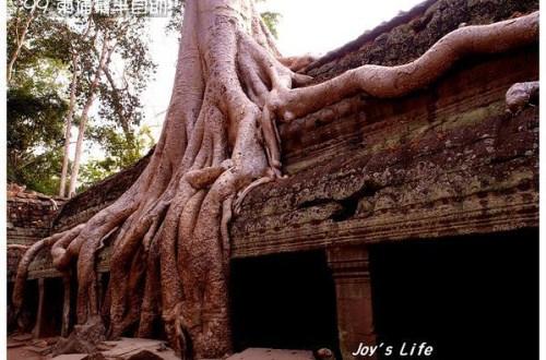 【Angkor】Ta Prohm 塔普倫寺