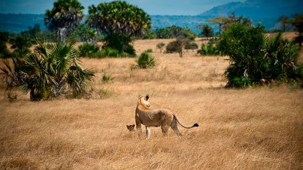 Cagar Alam Selous, Tanzania (Foto: phototracs)