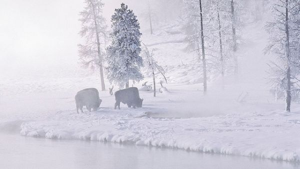 Taman Nasional Yellowstone, Amerika Serikat (Foto: lonelyplanet)