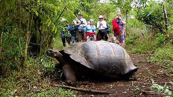 Kura-kura raksasa Galapagos (Foto: thelovelyplanet)