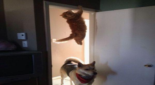 Kucing Bergaya Seperti Agen Rahasia (Foto: Imgur)