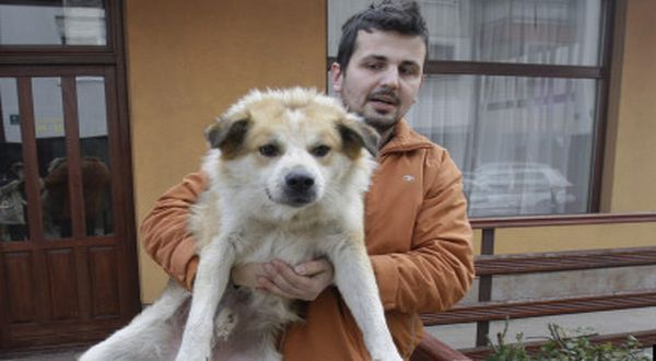Anjing di Sarajevo (Foto: AP)