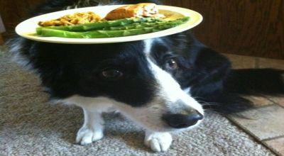Anjing unik jaga keseimbangan (Foto: Mirror)