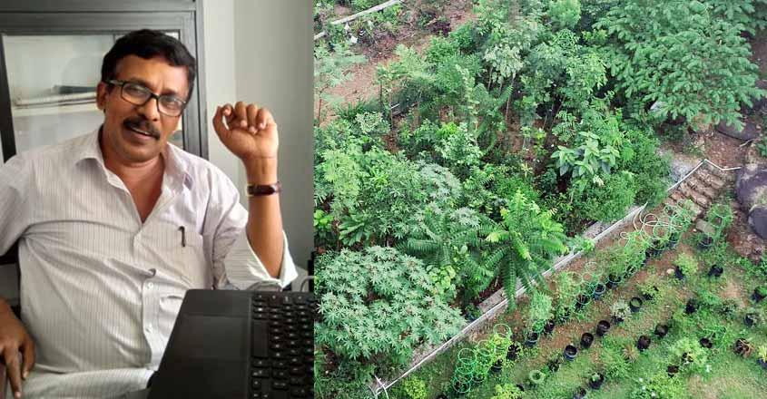 The miyawaki forest method of planting, named for the botanist who developed it, encourages tree communities to grow upward and to share. How To Grow A 100 Year Old Tree In 15 Years Meet Kerala S Miyawaki Kerala News Manorama English