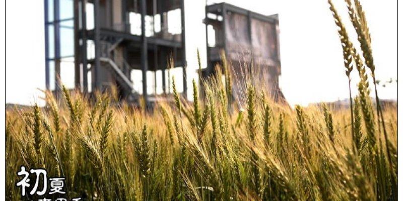 【台中散策遊記】初夏悄悄來訪~浪漫金色麥鄉歡迎光臨:大雅黃金麥田園(附地圖)