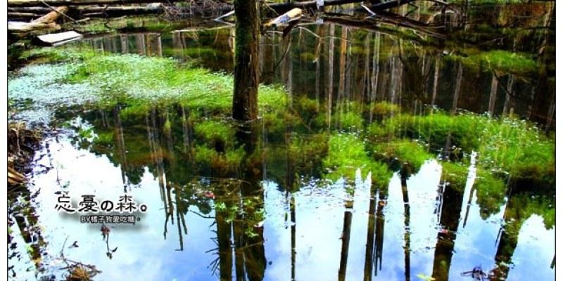 【南投隨行遊記】忘憂森林:絕美仙境~飄渺山間的秘景