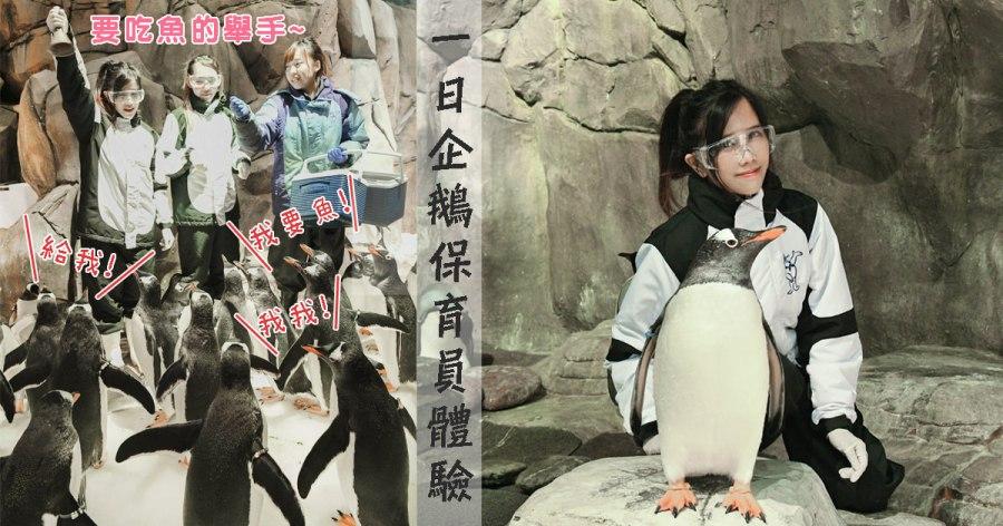 香港海洋公園│一日企鵝保育員體驗~整群企鵝討吃萌死人啦~和波普先生的企鵝同品種!