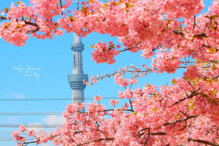東京市區就有河津櫻~舊中川河津櫻~可拍到晴空塔~二月底三月初提早開花不必人擠人~