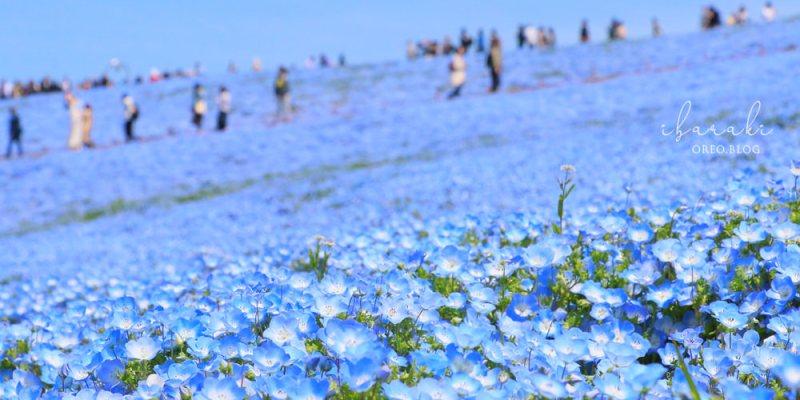 東京近郊景點│茨城常陸海濱公園~美翻的夢幻粉蝶花海~最佳欣賞時間、交通、地圖