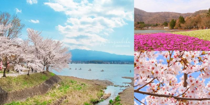 東京近郊~春天能看到富士山的三種花季整理│富士芝櫻祭、河口湖畔櫻花、天空花田鬱金香~交通&位置整理