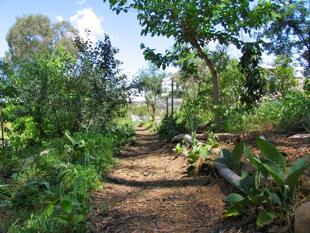 Permaculture foret jardin agroecologie