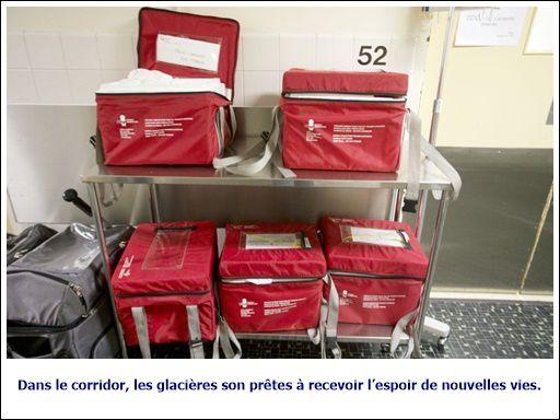 Dans les coulisses du don d'organes au Québec