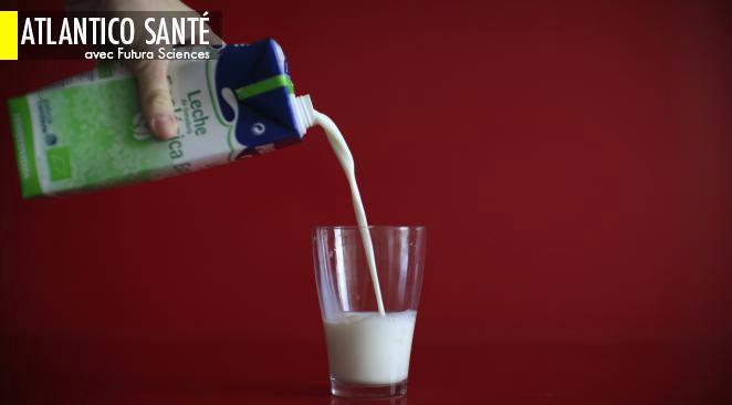Attention, boire du lait n'est pas une bonne idée pour les adultes !