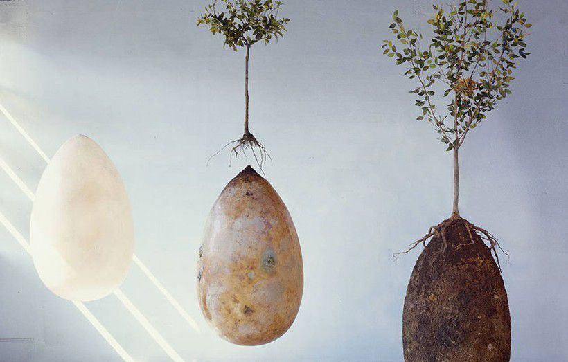 Ils transforment les défunts en arbres avec une capsule funéraire