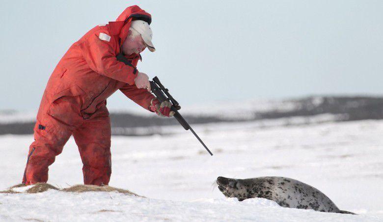 Feu vert pour tuer 400 000 phoques. L'autre visage de l'industrie du luxe