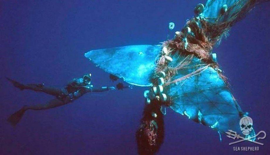 Ce que cache le port de Marseille : la vidéo choc de Sea Shepherd