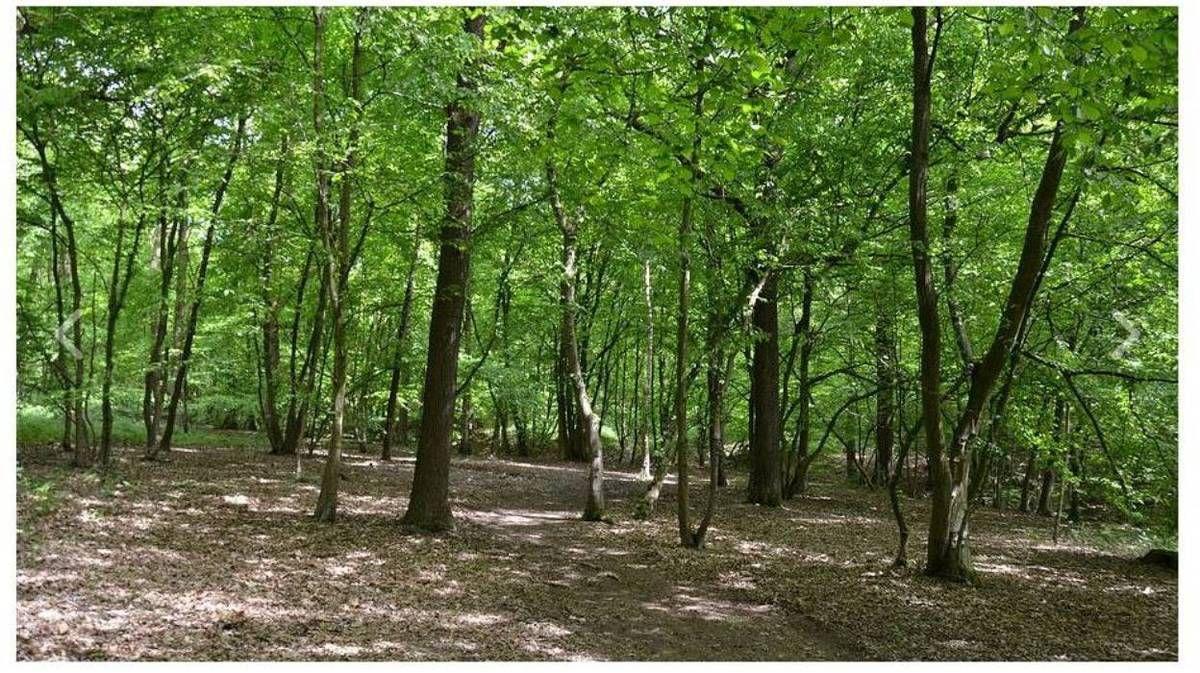 Les Arbres du souvenir: une forêt comme lieu de mémoire pour les défunts - © Tous droits réservés
