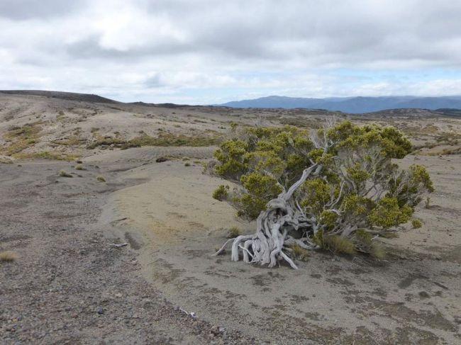 Tongariro Northern Circuit - Great Walk #1
