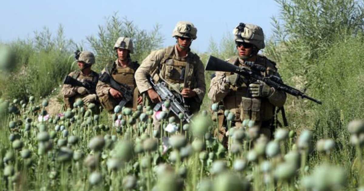 Soldats américains dans un champ de pavot en Afghanistan
