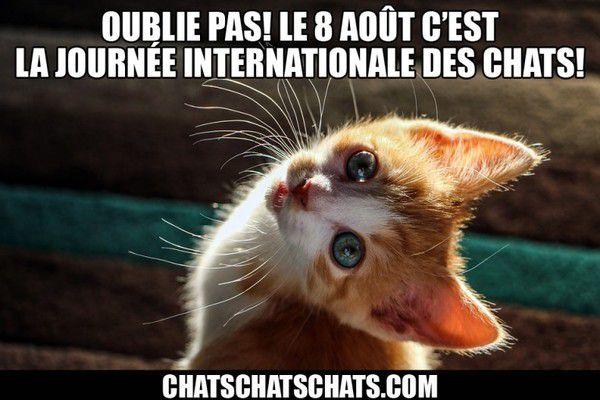 crédit : chachacha.com