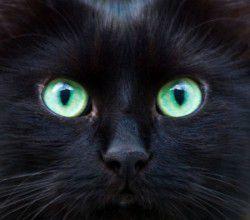 17 août, journée internationale du chat noir