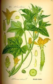 Fleurs de courgettes farcies au four