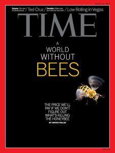 Un monde sans hyménoptères (abeilles) sauvages ?*