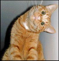 funny-cat_resize.jpg