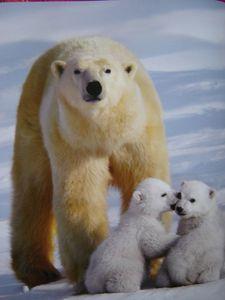 default-ourse-polaire-petits5-big