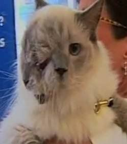 ce-chat-a-deux-tetes 57318 w250